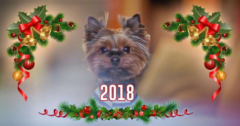 PondLiner.ru – С Новым Годом и Рождеством!